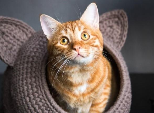 Домик для кота крючком своими руками